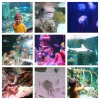 New Behind The Scenes Discovery Tours at SEA LIFE Aquarium AZ!