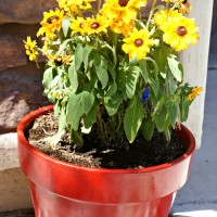 Thrifty Thursday: DIY Spray Painted Flower Pots for Instant Curb Appeal!