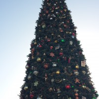 The Christmas Trees of Disneyland