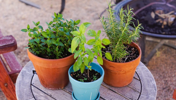 How To Grow Herbs in Containers