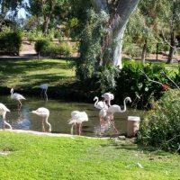 Sunday Drive: Phoenix Zoo